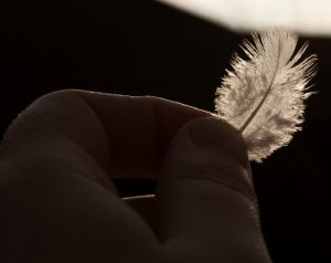 1168392_feather