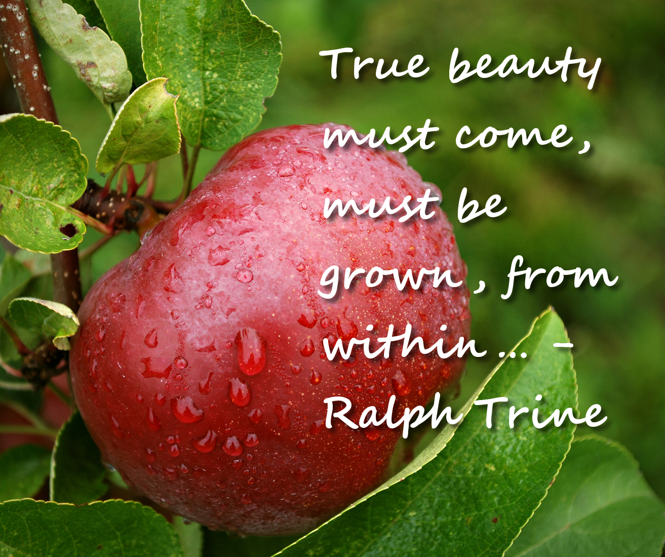 When Beauty Comes From Within