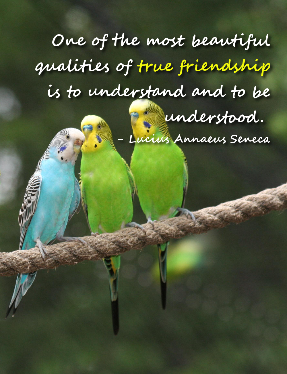Quotes On Friendship Quotes Poems Prayers And Words Of Wisdom